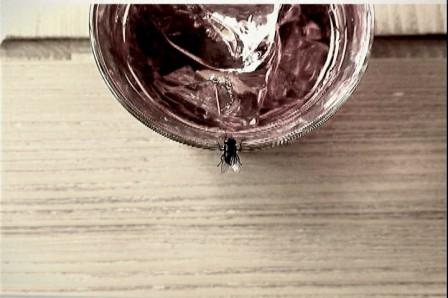 fly.02